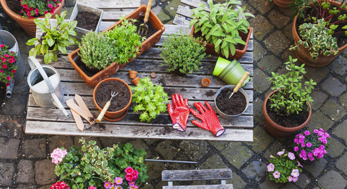 7 Easy Landscaping Moves to Up Your Curb Appeal This Season