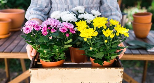 This Is the Easiest Way to Avoid Overwatering Plants, According to the Royal Horticultural Society