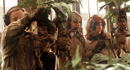 Etsy's Harry Potter Mandrakes Will Make You Feel Like a Herbology Wizard