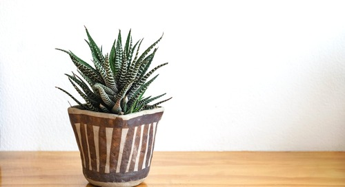 How to Grow and Care for Haworthia Plants