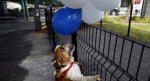 Boston running well ahead of most major cities in dog parks: Report
