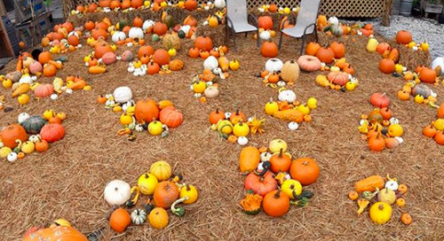 5 great pumpkin patches around Atlanta, mapped