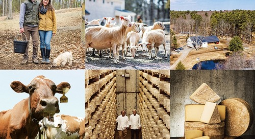 The Ultimate Guide to New England's Cheese Revolution