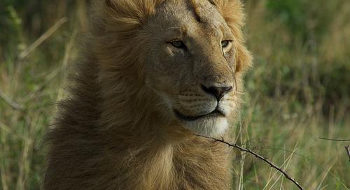5 Top Safari Destinations in Kenya