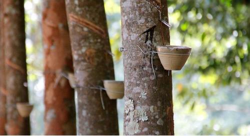 Chaîne amont et cartographie des risques de milliers de petits propriétaires-exploitants : l'initiative rubberWay® récompensée !