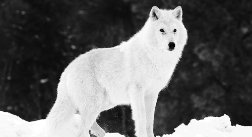 Arctic Wolf Agent for Linux: Extending Endpoint Visibility, Security Controls Benchmarking, and More