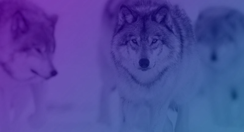 Forrester Study: Arctic Wolf Security Operations by the Numbers