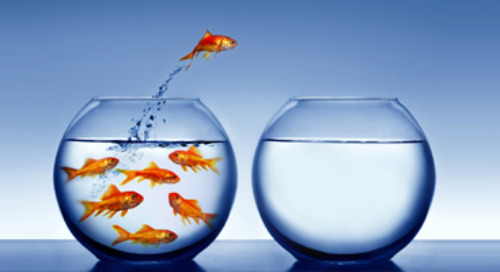 CMOs in Transition: Knowing when to leave, where to next, protecting your team and more
