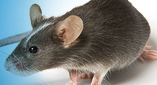 Mutant and Transgenic Mouse Strains: A Beginner's Guide