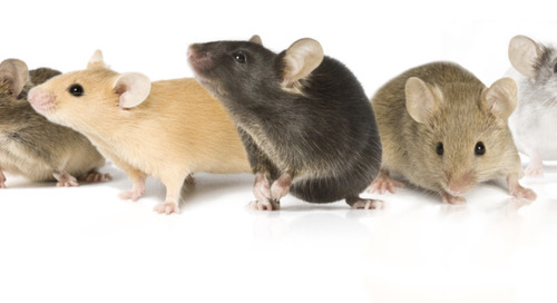 Special Rebroadcast of 2018 21st Century Mouse Genetics