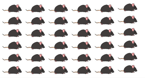 Basics of Mouse Genetics