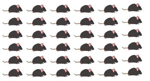Basics of Mouse Genetics