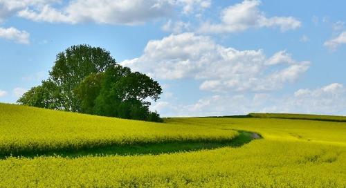 Assurer notre milieu de vie : la nécessité de protéger les actifs naturels contre les dommages et la destruction