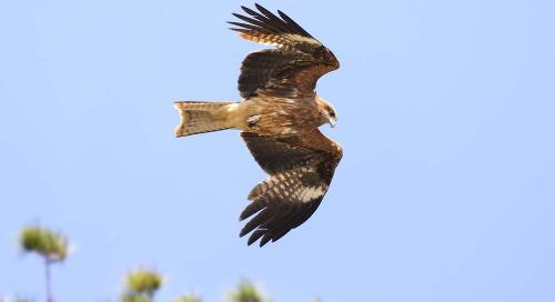 Raise corporate biodiversity ambition & aim at no net loss