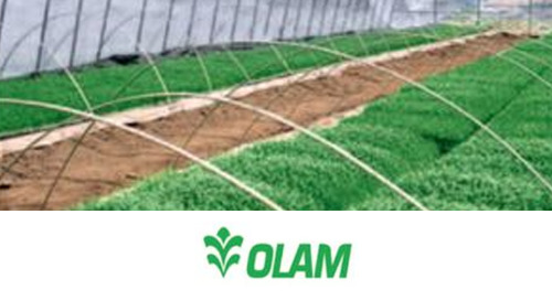 Olam International