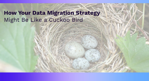 How Your Data Migration Strategy Might Be Like a Cuckoo Bird