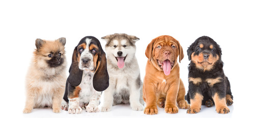 Quiz Time: What Type of Puppy is Your Business?