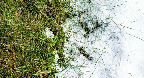 3 Ways Landscapers Can Stay Top-of-Mind This Winter
