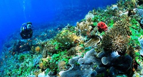 5 Diving Spot Terbaik yang Patut Kamu Selami di Indonesia