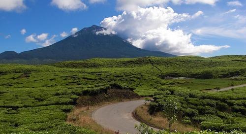Jalan-Jalan Ke Kebun Teh Terluas di Indonesia