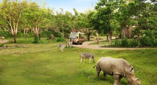 Menantang Adrenalin di Bali Safari & Marine Park