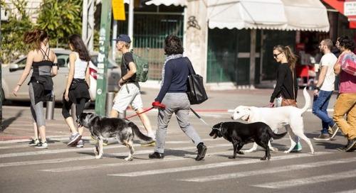 Kota Ramah Anjing Ini Semakin Ramah