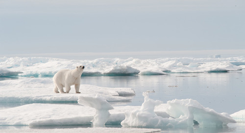 Q&A: Polar Bears International Expert Geoff York on his Upcoming North Pole Expedition