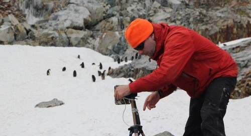 A study on climate change & declining penguin populations