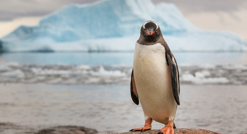 Pro Tips for Amazing Antarctic Photography: Q&A with Dave Merron