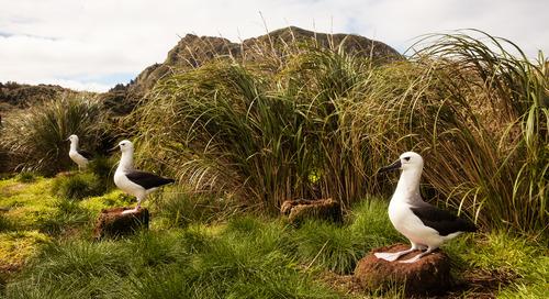 Exploring Remote Atlantic Islands On A Birding Expedition With Birdman Noah Stryker