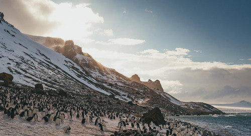 Season Highlights from Antarctica: Powerful Experiences in a Powerful Place