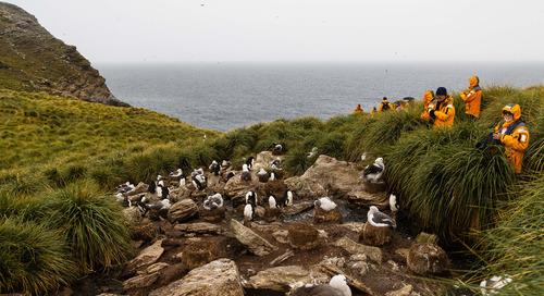 5 Fun Facts: Falkland Islands (Islas Malvinas)