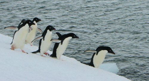 Our Penguinologist Partners Have an Ingenious New Way to Track Penguins