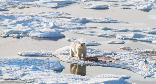 Highlights of Arctic Exploration: Polar Bears