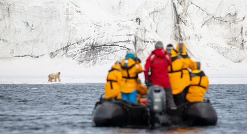 An Unscripted Arctic Safari: Candid Encounters With Iconic Wildlife