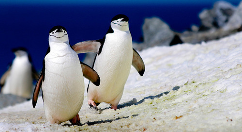 South Orkney & South Shetland Islands: Vibrant Scenery, Stunning Wildlife
