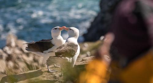 The Falkland Islands: A Birder's Paradise