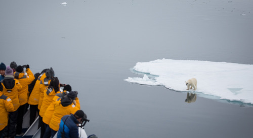 5 Things You Didn't Know About Polar Bears