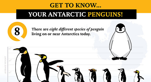 Everything You Wanted to Know About Antarctic Penguins