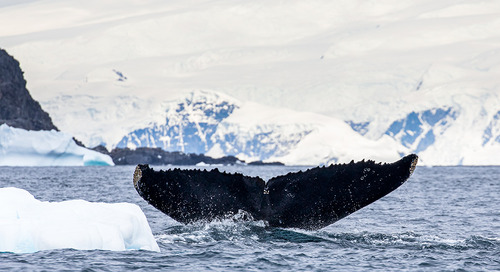 Best time to see whales in Antarctica