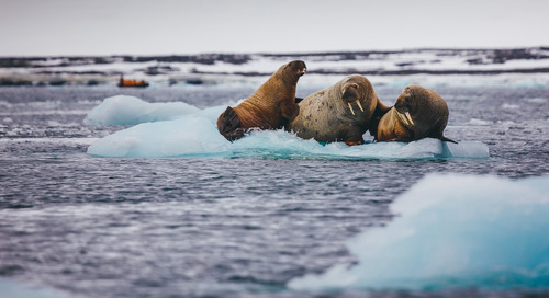 Why you should visit the Arctic in May