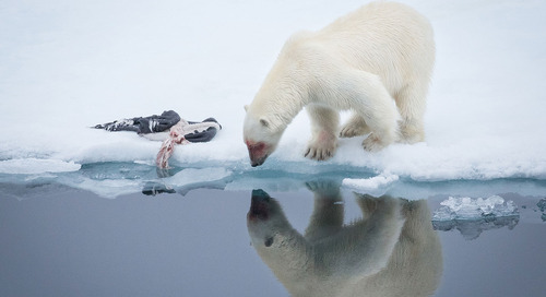 The Best Place to See Polar Bears and Northern Lights