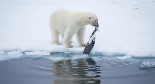 Best Things To Do in Svalbard in Arctic Norway