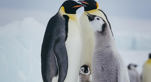 Best Time to See Emperor Penguins in Antarctica