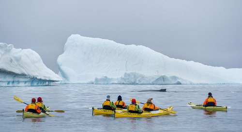 Everything you need to know About Kayaking in Antarctica