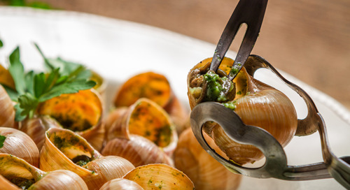 5 Fakta Menarik Tentang Memakan Escargot