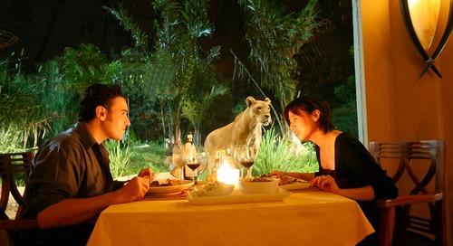 Makan Malam Romantis Sekaligus Liar