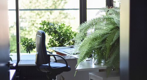 The #1 Office Perk? Natural Light