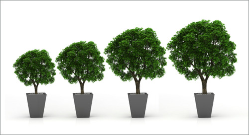 Seed Stage Startup vs. Growth Stage Employer
