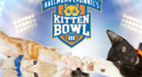 Hallmark Channel: Kitten Bowl V [Returning Event]